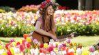 Những lễ hội truyền thống tại Hà Lan hấp dẫn khách du lịch